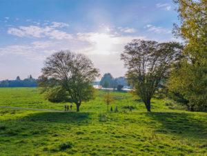 Richmond Park en solig dag © Shutterstock